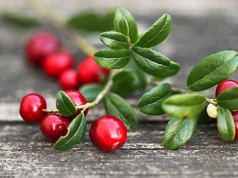 Amazing health benefits of cranberries