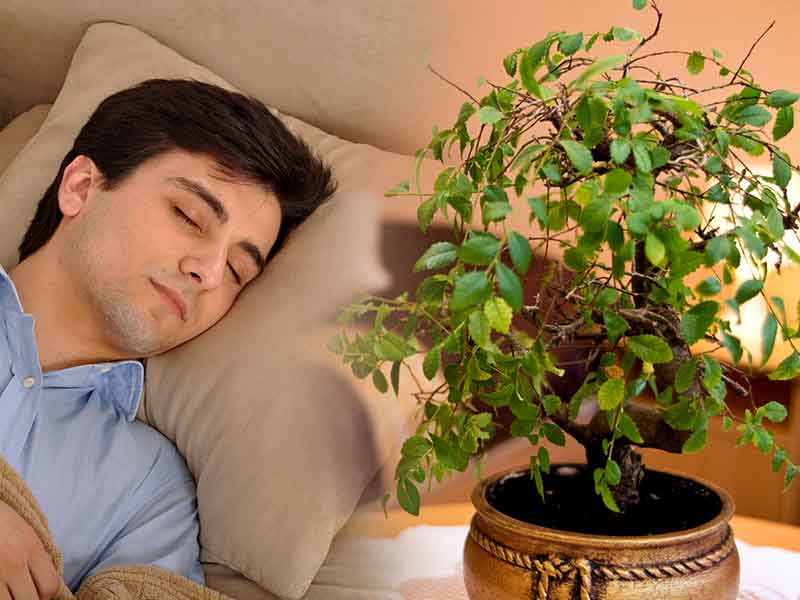 Which Plants In Bedroom Can Give You Better Sleep