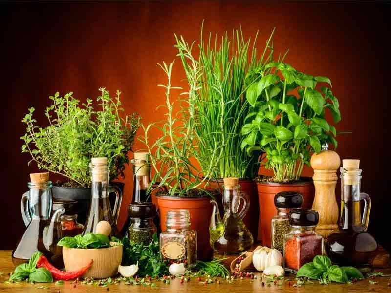 Best Healing Herbs Which You Should Be Aware Of