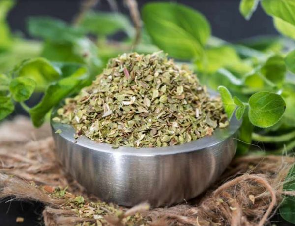 What Are The Health Benefits Of Oregano