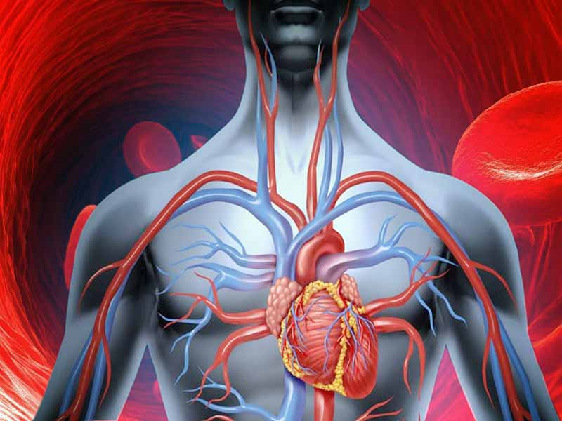 How to improve blood flow in the most natural ways