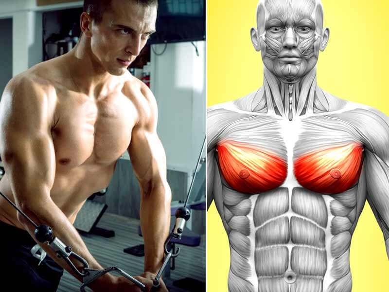 Four great exercises to get chiseled lower chest