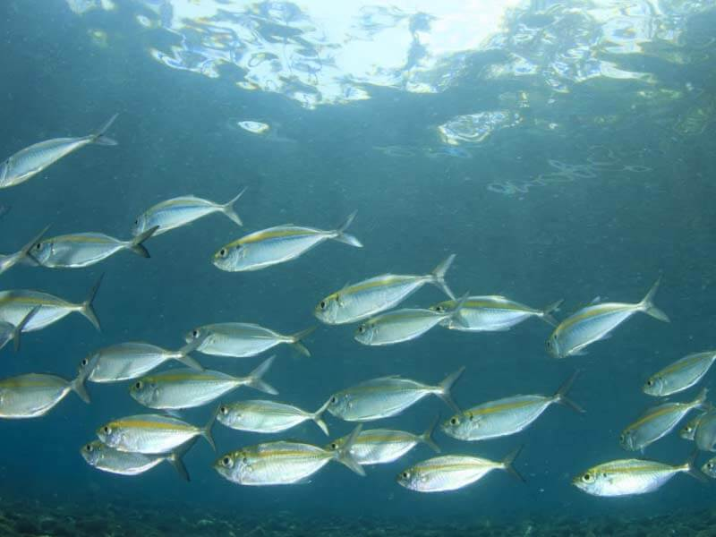Why Few Fishes Are Not Good To Eat - lifealth