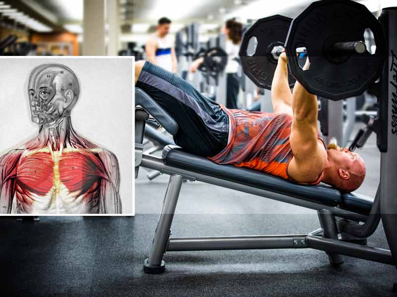 tips raise chest mass improve bench press