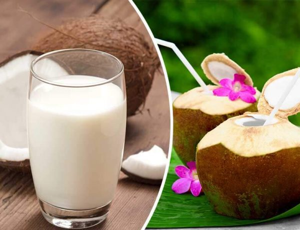 What is the difference between the coconut milk and coconut water