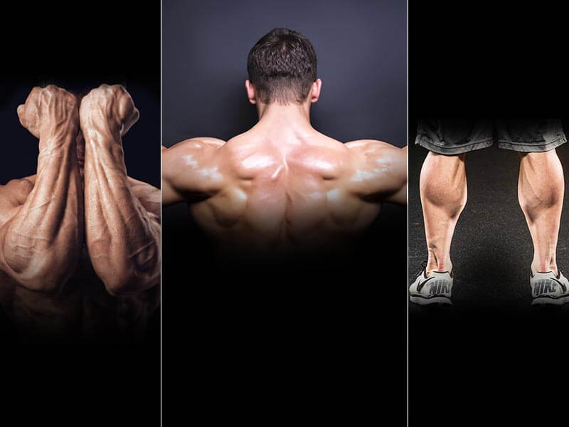how to make your neck shoulder and calves muscles muscular