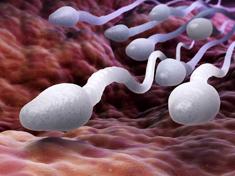 know how long the sperm can survive outside the body