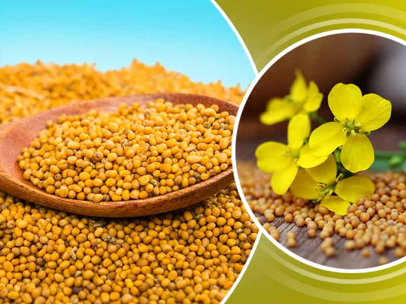 what are the health benefits of yellow mustard