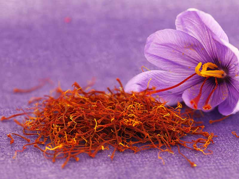 What Are The Health Benefits Of Saffron Milk (Kesar Doodh)