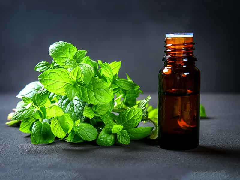 natural skin moisturizers and herbs